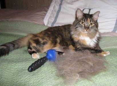 handske til kattehår
